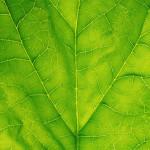 Crean una hoja artificial que genera más energía que la fotosíntesis